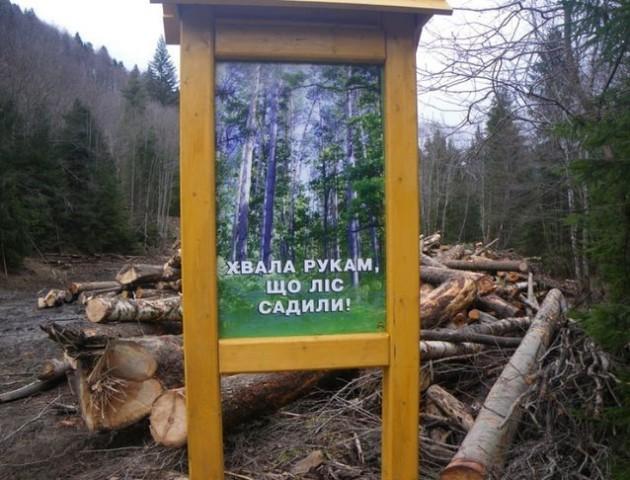 Україна ризикує за декілька років втратити всі соснові ліси