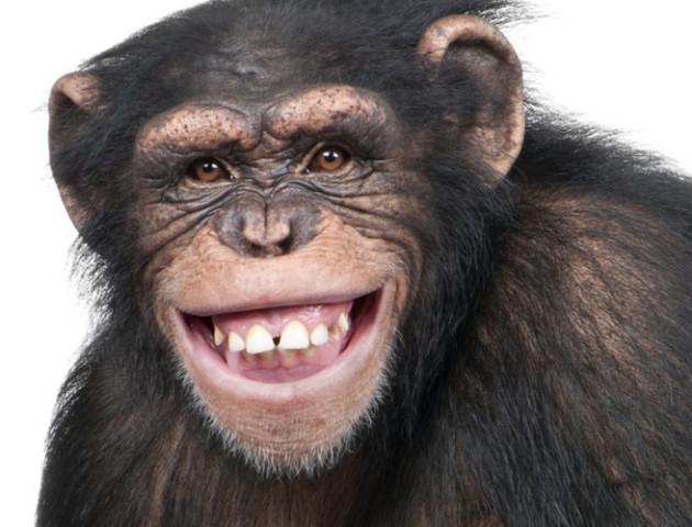 Вчені вперше відновили спинний мозок у приматів. Люди наступні?
