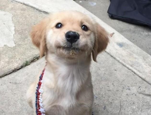 Вчені визначили, як правильно говорити з собаками