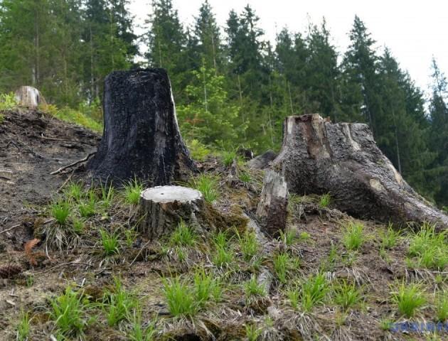Депутати Волиньради вимагають припинити свавілля щодо використання лісових ресурсів