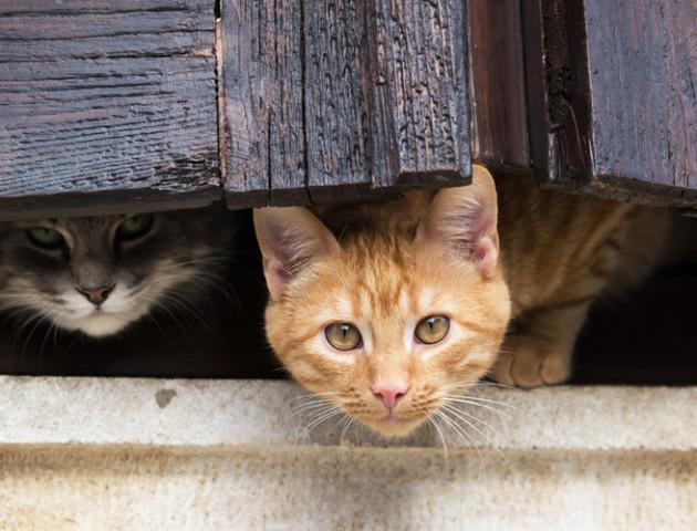 Безпритульні коти стали частиною екосистеми Дніпра