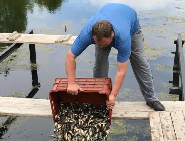 У канали Центрального парку Луцька випустили понад 500 кг малька коропа. ФОТО