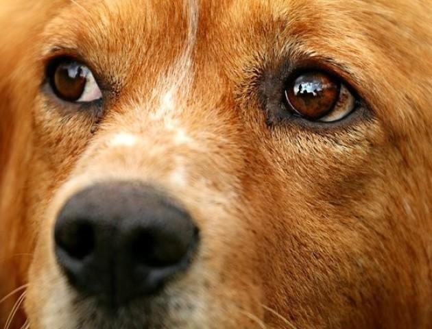 Господар врятував собаку від вірної загибелі і випадково зробив «найкраще в світі фото»