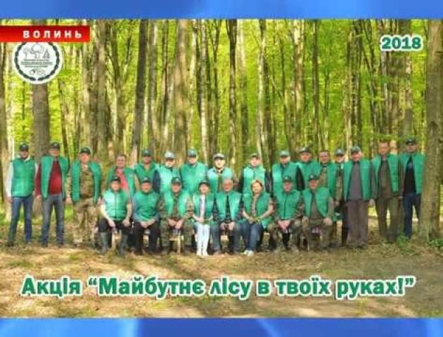 Сторінками лісокультурної кампанії-2018 на Волині: як це було. ВІДЕО
