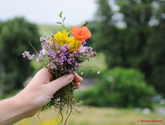 Літні червневі дні в об'єктиві луцького фотографа