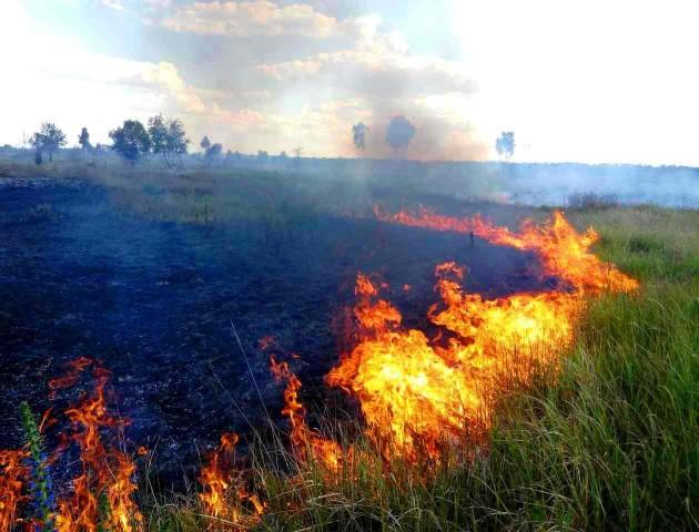 В Україні оголосили найвищий рівень пожежної небезпеки