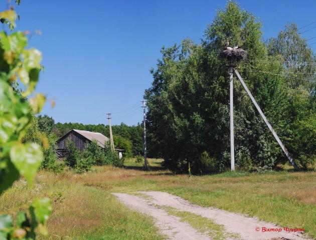 «Поліський краю дорогий»: порція прекрасних світлин від луцького фотографа