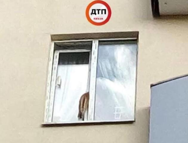 Кіт застряг у вікні і помер: фото