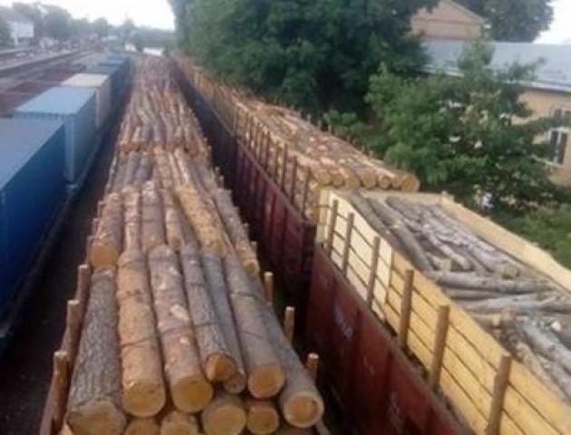 На Волині вивозять за кордон ділову деревину?