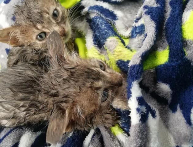 Волинян просять прихистити кошенят, яких викинули посеред дороги. ФОТО