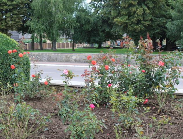 Краса літа: місто на Волині  потопає в різнобарв'ї квітів. ФОТО
