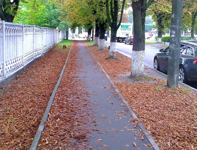 У Луцьку посеред літа почало опадати листя. ФОТО