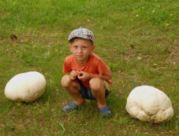 На Волині дідусь з внуком вполювали гриби-велетні. ФОТО