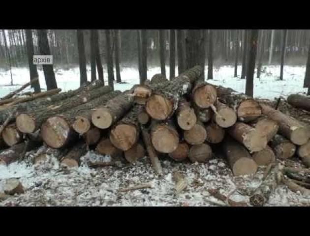 Волинські лісівники обговорили проблеми галузі з депутатами. ВІДЕО