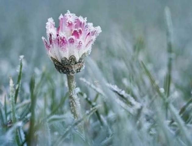 Синоптики попередили про заморозки у серпні
