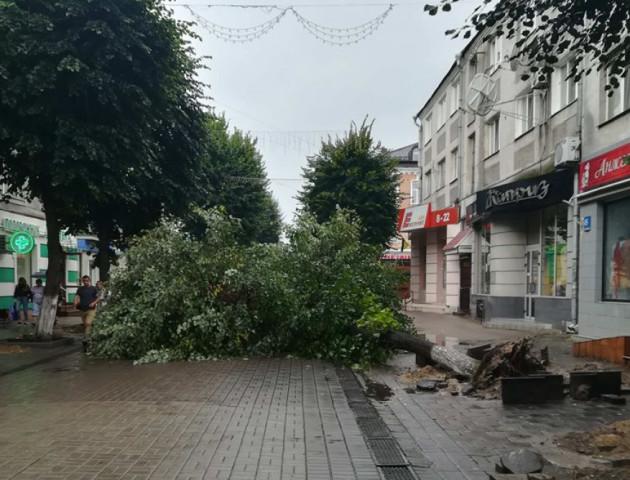 У центрі Луцька хочуть зрізати кілька дерев