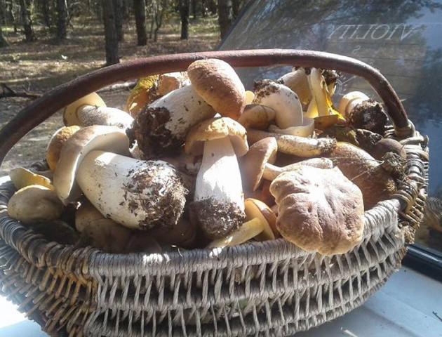 Волинянка похизувалася кошиком грибів