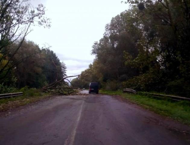 Що наробила негода на Волині: поламані дерева, підтоплені вулиці та зірвані дахи. ФОТО