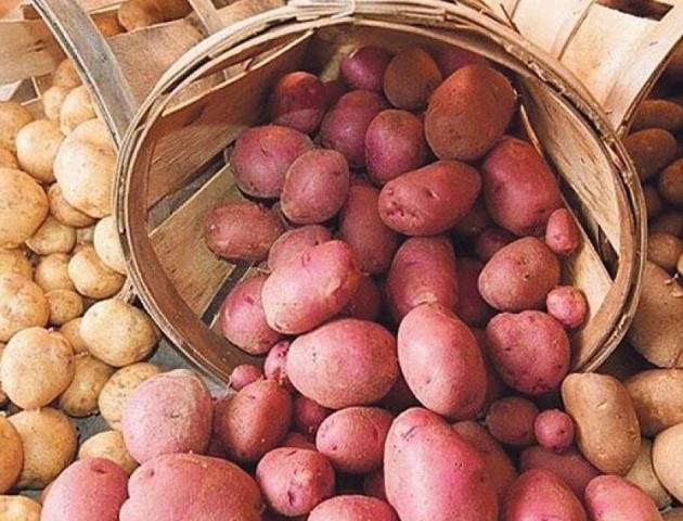 Закладка картоплі не терпить поспіху, - головний «бульбаш» Волині